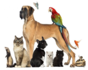 Pet Service @ Christ Church Mount Gambier